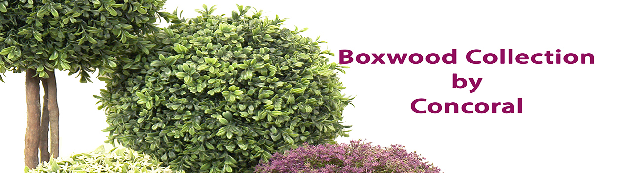 boxwood collection