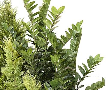 Plantas y flores artificiales proyectos a medida concoral s a - Plantas artificiales exterior ...