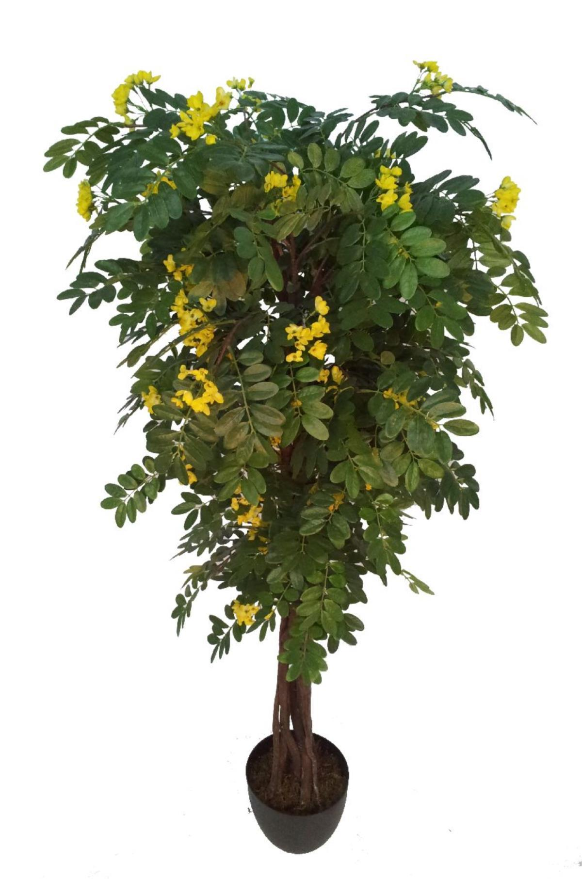 Rbol de acacia amarilla 110cm for Arbol de fotos manual