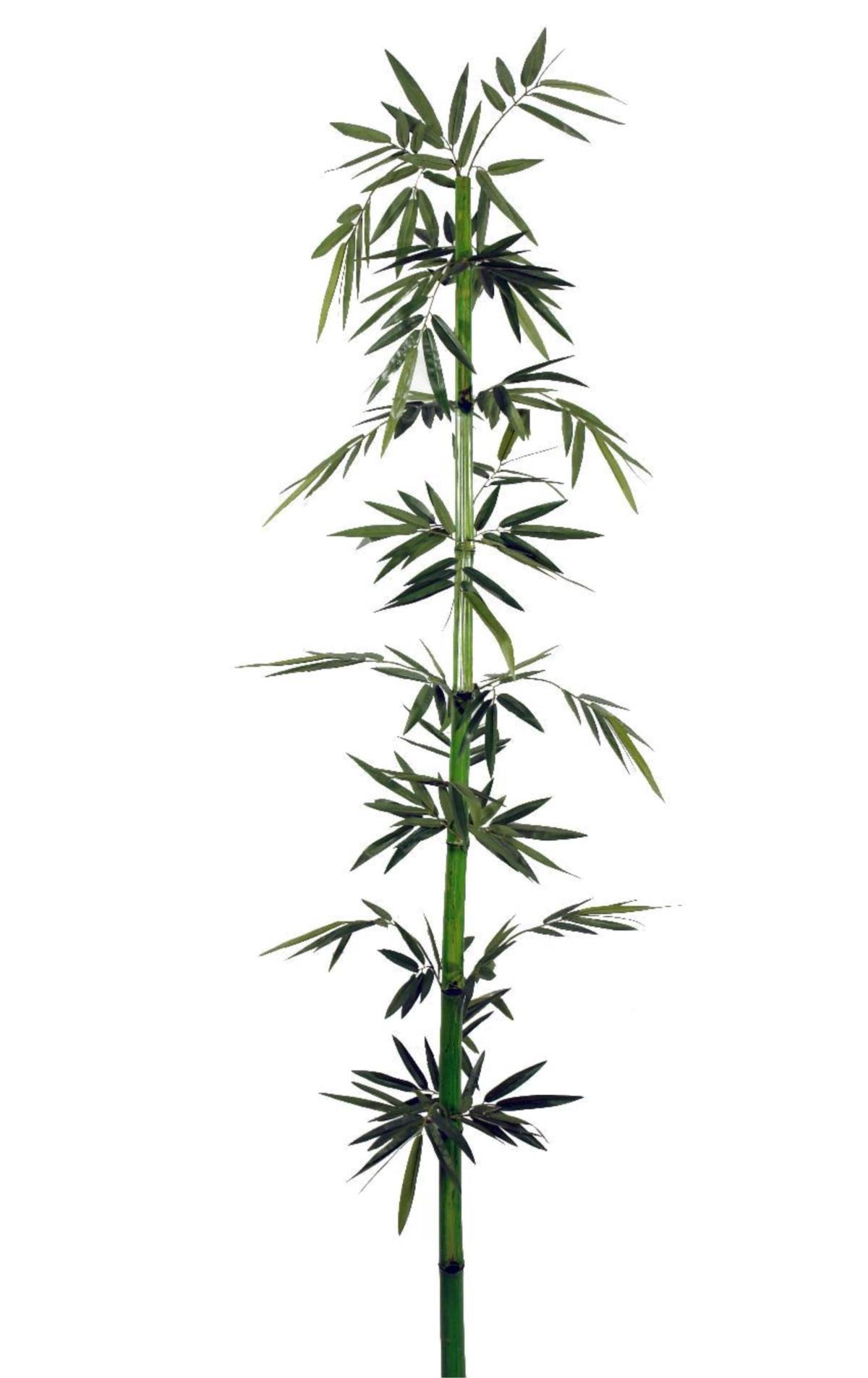 De Bambu Decora Verde 220cm ~ Cañas De Bambu Verdes Para Decorar