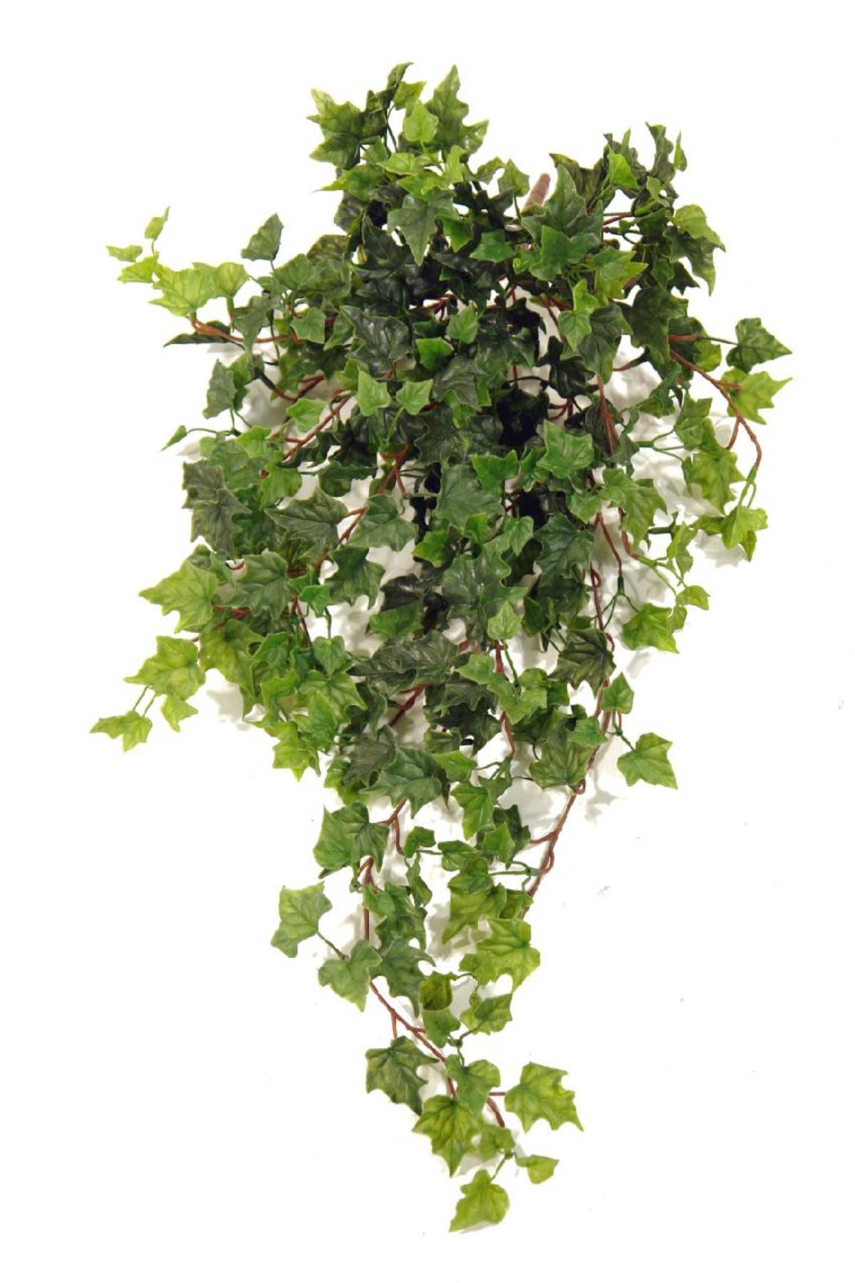 planta de hiedra colgante 75cm - Plantas Colgantes Exterior