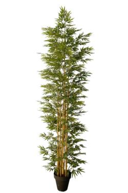 Bambu Decora redondo natural - 300cm