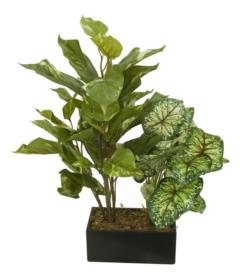 Black box Caladium y pothos - 20x11x55m