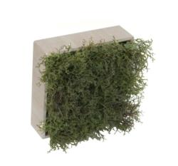 Concobox Alga verde base natural - 20x20cm
