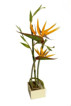 White box ave del paraiso - 11x11x66cm