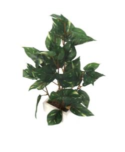 White box pothos mini - 8x8x30cm