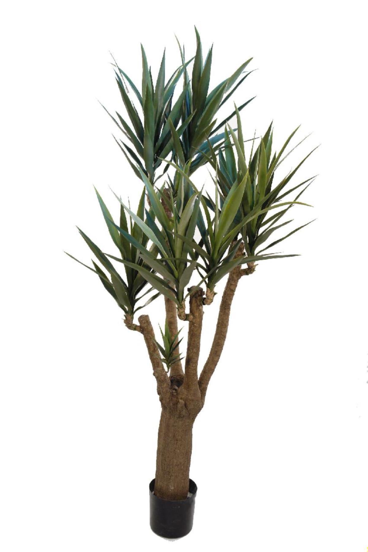 Yuca tronco ramificado con maceta 200cm for Planta yuca exterior