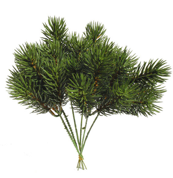 Pick de Pino picea verde(6 picks) - 23cm