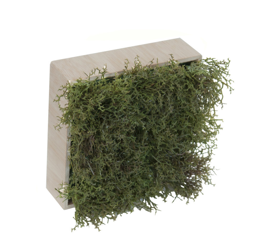 Concobox Alga verde base natural - 20x20cm-U.V.