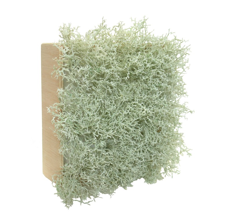 Concobox Alga Crema base natural - 20x20cm