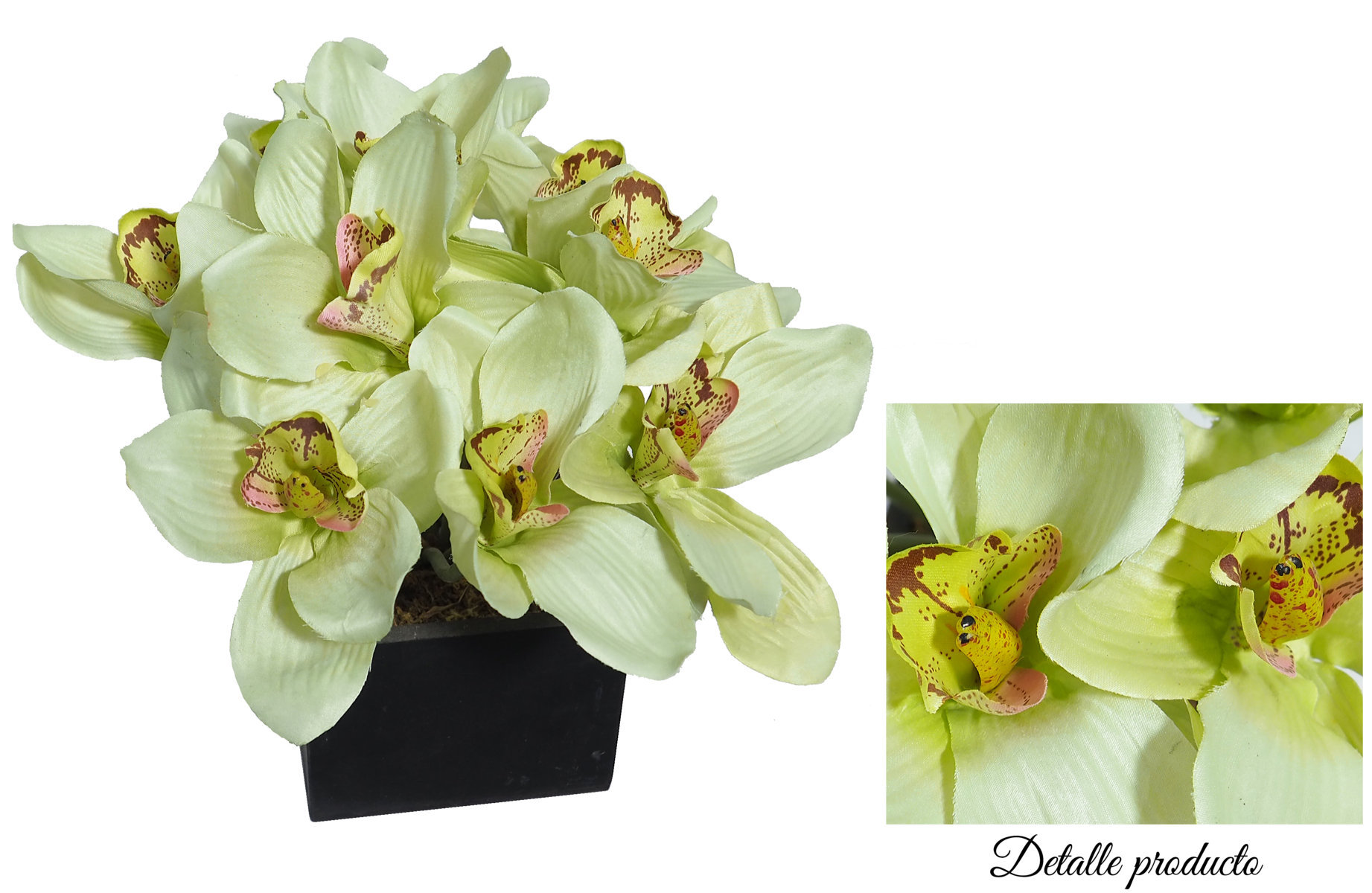 Black box Cimbidium verde - 11x11x26cm